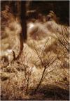 """skpt """"rubinarowe, leśne, przedwiosenne"""" komentarzy: 3 (2017-03-06 22:50:00)"""