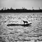 """wlamparski """"samotny żeglarz"""" komentarzy: 4 (2017-04-01 11:53:32)"""