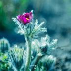 """dudisan """"///"""" (2017-04-02 10:57:44) komentarzy: 1, ostatni: b. ładne, urocze :)"""