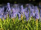 """BJZ """"Idzie wiosna....."""" komentarzy: 0 (2017-04-29 21:56:37)"""