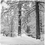 """barszczon """"wiosenny atak zimy"""" komentarzy: 19 (2017-05-05 13:48:26)"""