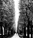 """shawrus """"droga przez życie..."""" komentarzy: 4 (2017-05-07 13:22:35)"""