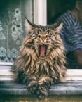 """terro """"Ziewnął kot"""" komentarzy: 1 (2017-05-12 20:31:55)"""