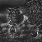 """Arek Kikulski """"polowanie"""" (2017-06-06 19:56:56) komentarzy: 3, ostatni: jest barf jest impreza :)"""