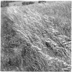 """barszczon """"majowy wiatr..."""" (2017-06-30 12:26:21) komentarzy: 6, ostatni: @Miljo - dziękuję bardzo :)))"""