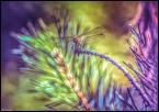 """Remik Nowakowski """"Dragonfly w oczekiwaniu......."""" (2017-07-01 20:21:10) komentarzy: 3, ostatni: Tak, przyczajona, ułamek sekundy i start. Umiesz bawić się kolorami"""