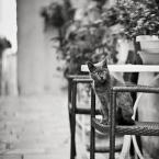"DELF ""miau :)"" komentarzy: 4 (2017-07-11 11:07:31)"