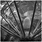 """barszczon """"warszawskie tropiki..."""" (2017-07-21 15:15:27) komentarzy: 8, ostatni: :) dzięki"""