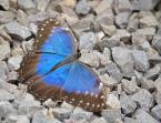 "GrulaQ ""Motyle"" komentarzy: 2 (2017-09-15 14:55:51)"