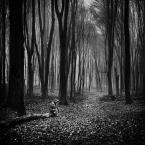 """Arek Kikulski """"samotnia"""" (2017-09-21 20:09:06) komentarzy: 11, ostatni: Zjawiskowy  choć mroczny nastrój"""