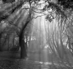 """xemily """"Poranne prześwity"""" (2017-09-27 20:06:38) komentarzy: 11, ostatni: Opowieść o świetle. Podoba mi się."""