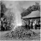 "barszczon ""jubileuszowa erupcja..."" komentarzy: 5 (2017-10-12 13:18:59)"