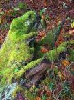 """tevye """""""" (2017-10-15 21:51:53) komentarzy: 1, ostatni: zielony potwór z mokradeł :)"""