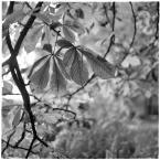 """barszczon """"to już jesień..."""" (2017-10-26 16:02:26) komentarzy: 8, ostatni: Też mnie się bardzo podoba :)"""