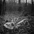 """miljo """""""" (2017-11-10 18:41:18) komentarzy: 1, ostatni: Historia tego drzewa jest prawdopodobnie taka, że już nie rośnie, ale ogrzewa dom :)"""