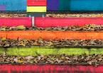 """macieknowak """"Tęczowa jesień"""" (2017-11-11 23:43:14) komentarzy: 12, ostatni: Ciekawe i ładne."""