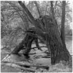 """barszczon """"w poszukiwaniu jesieni..."""" (2017-11-14 10:20:37) komentarzy: 12, ostatni: :) coraz bardziej mi się podoba ta fotografia w Waszych - mili Oglądający - interpretacjach. :) Matyldo :) - wielkie dzięki :)"""