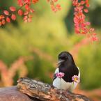 """dudisan """"///"""" (2017-11-24 14:44:45) komentarzy: 2, ostatni: elegancko ubrany wybiera kwiaty dla swojej damy ;-)"""