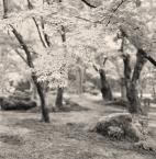 """Rafał Król """"Enko-ji Temple, Kyoto"""" komentarzy: 5 (2017-11-30 11:59:21)"""