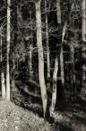 """madamus """"Drzewa"""" komentarzy: 2 (2017-12-29 11:18:04)"""