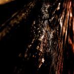 """Photo A.Mizia """"SĘK"""" (2018-02-21 23:23:06) komentarzy: 1, ostatni: dodałbym, że jest to sęk w drewnie przypominający oko lub odwrotnie..."""