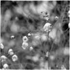 """barszczon """"zimowe kwiatki..."""" (2018-02-23 17:25:32) komentarzy: 4, ostatni: bdd :)"""