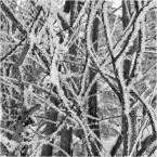 """barszczon """"w krainie Królowej Śniegu..."""" (2018-02-23 17:29:41) komentarzy: 6, ostatni: bdd :)"""