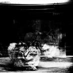 """IV Król """"*"""" (2018-02-28 19:03:40) komentarzy: 2, ostatni: Jak to kot, ma wiele zywotow"""