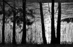 """dreptaq """"zimnoblask popołudniowy znad jeziora S.(nr2)"""" (2018-03-03 20:20:53) komentarzy: 3, ostatni: bdb, lubię zdjęcia które przypominają krosna :)"""
