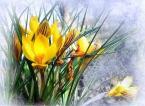 """Yani """"21 marca 2018-wiosna!"""" (2018-03-21 20:31:19) komentarzy: 1, ostatni: Ładny obraz...."""