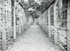 """IV Król """"*"""" (2018-04-15 18:02:56) komentarzy: 2, ostatni: """" Dziewczęta z Auschwitz """"...2010 dokument....https://gloria.tv/video/7LbRDEXKBPPAD32qsCTAUAcgA...wywarl na mnie......................"""