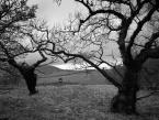 """lennys """"Drzewa"""" (2018-05-03 11:09:25) komentarzy: 7, ostatni: podoba się"""