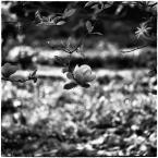 "barszczon ""czas magnolii"" komentarzy: 7 (2018-05-08 11:29:53)"
