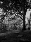 """lennys """"Groby i drzewo"""" komentarzy: 5 (2018-05-21 11:12:06)"""