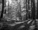 """tomcha """"Leśne pokłony 2"""" (2018-05-29 19:24:30) komentarzy: 4, ostatni: gregy[ 2018-08-20 09:16:43 ]  Pokłon + Przesunięcie to przyczyna"""