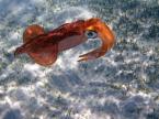 """Grazina """"W morskiej toni..."""" (2018-06-13 18:54:05) komentarzy: 3, ostatni: Pięknookie stworzonko  :)"""