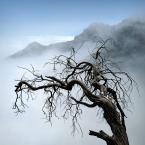 """Meller """"Drzewo Życia.."""" (2018-06-22 22:06:59) komentarzy: 5, ostatni: podoba się,  Foto:[+++++]"""