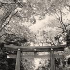 """Rafał Król """"Torii, Meiji Jingu, Tokyo"""" (2018-06-26 18:49:41) komentarzy: 3, ostatni: b. ładne :)"""