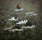 """""""Like a butterfly..."""" komentarzy:  ()"""