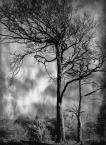 """lennys """"Drzewa"""" (2018-08-17 15:05:02) komentarzy: 1, ostatni: b. ładne :)"""