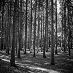 """tomcha """"Szczecin by Lubitel"""" (2018-09-15 11:35:17) komentarzy: 3, ostatni: b. ładne :)"""