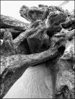 """MartaW """"było drzewo"""" (2018-10-26 20:31:12) komentarzy: 3, ostatni: Drogie dzieci, a co nas zaskakuje i zachwyca wieloma formami? Przy ro da."""