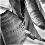 """barszczon """"formy życia roślinnego..."""" komentarzy: 8 (2018-11-18 18:30:06)"""