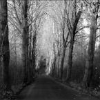 """W-Zy """"I I"""" (2018-11-29 10:19:41) komentarzy: 5, ostatni: Bezlistne drzewa, esencja późnej jesieni."""