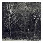 """papajedi """"sekretne życie drzew"""" (2019-02-13 18:53:55) komentarzy: 6, ostatni: fajnie podane"""